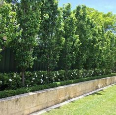 Ornamental Pears underplanted with gardenia florida Backyard landscaping trees ✔ 31 amazing large backyard landscaping 22 > Fieltro. Large Backyard Landscaping, Privacy Landscaping, Landscaping Ideas, Residential Landscaping, Landscape Plans, Landscape Design, Back Gardens, Outdoor Gardens, Outdoor Trees