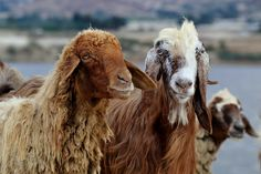 Distant Twins by Mohammad Asfour on 500px