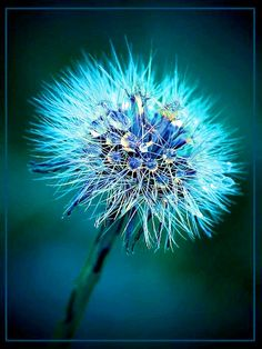 beautiful in the center and prickly looking (but not) around the edges..........