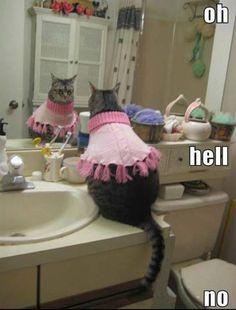 funny cat clothes