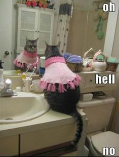funny cat clothes
