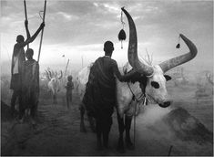 "Herdsmen driving their cattle into a camp in southern Sudan, from Mr. Salgado's collection called ""Genesis."""