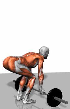 健身房怎麼鍛鍊?24種全身肌肉鍛鍊方法gif圖解