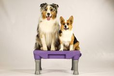 The KLIMB dog training platform was designed to help you and your dog develop a better relationship. Dog Training Treats, Pets Online, Dog Agility, Cockatiel, All Dogs, Guinea Pigs, Dog Owners, Your Dog, Corgi