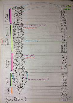 diet notes weightloss ~ diet notes - diet notes weightloss - diet notes iphone - diet plan notes - sams notes diet - notes for diet - healthy diet notes - balanced diet notes Nursing School Notes, Medical School, Radiology Student, Medicine Notes, Sports Medicine, Medical Anatomy, Anatomy And Physiology, Nursing Students, Medical Students