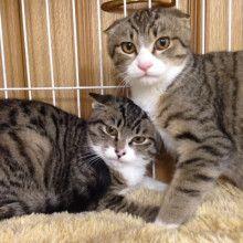 里親さんブログチョビンくんの御報告 - http://iyaiya.jp/cat/archives/71823