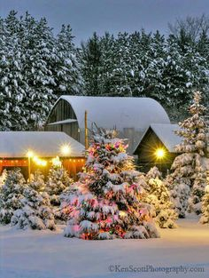 Barn surrounded by pretty snow covered trees & lights
