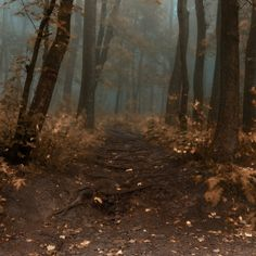 aspooktacularhalloween: -Road to wisdom of autumn- by *Janek-Sedlar Ethereal Photography, Nature Photography, Autumn Tale, Level Design, Wood Tree, Woodland Theme, Deep, Heaven On Earth, Go Outside