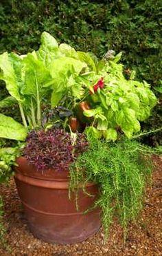 Edible Container Garden | Vegetable Gardening: Getting Started | Missouri Botanical Garden