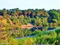 Greenery on the Nile banks, Karima, Northern Sudan (By Julie Dewilde)