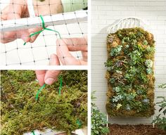 Vertical moss and succulent garden - how to