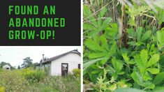 FOUND AN ANANDONED GROW-OP!!! SURPRISE ENDING!!! Up House, Abandoned Houses, The Outsiders, Explore, Plants, Abandoned Homes, Exploring, Plant, Abandoned Mansions