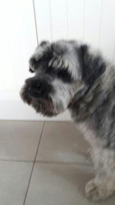 My dog : neska