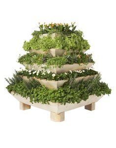 Plantepyramide