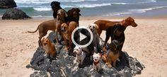 Quand des chiens et un chat heureux refont le clip de Happy (Vidéo du jour)