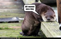 funny otters   Funny Otter pics  Funny Animal