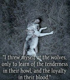 I miss my Buddy So much. Best Hybrid Wolf Dog Ever See You In Heaven - I miss my Buddy So much. Best Hybrid Wolf Dog Ever See You In Heaven Informations About I miss my Bu - Wolf Qoutes, Lone Wolf Quotes, Great Quotes, Me Quotes, Inspirational Quotes, Of Wolf And Man, Wolf Life, Warrior Quotes, Warrior Spirit