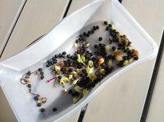 Mecki macht...eine erste Samenausbeute von ihren Tabakpflanzen-Wichteln... 2016 next Generation - ich freu mich schon! Next, Secret Santa, Seeds, Plants