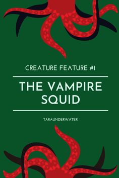 The vampire squid is a living fossil found in the deep ocean. With the name vampire squid, this creature is NOT what you imagine. Learn about the vampire squid on my blog. vampire squid  marine biology  marine biologist  education  ocean  science  marine science  conservation  creature feature  taraunderwater Vampire Squid, Living Fossil, Biologist, Marine Biology, Creature Feature, Conservation, About Me Blog, Creatures, Ocean