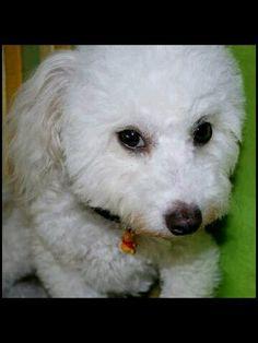 Shy Bullet, Dogs, Animals, Animales, Animaux, Pet Dogs, Doggies, Animal, Animais