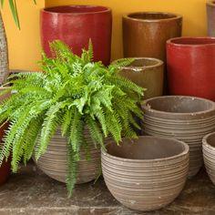 Plantas de sombra! Essas dondocas são perfeitas para ambientes com pouca luz, porem precisam de cuidados especiais. No nosso site, conheça algumas dicas de como cuidar delas. Fresco, Flora, Planter Pots, Green, Gardens, Landscaping Design, Vegetable Gardening, Gardening, Vases