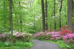 Winterthur Gardens and Enchanted Woods - wouldn't mind visiting this place !