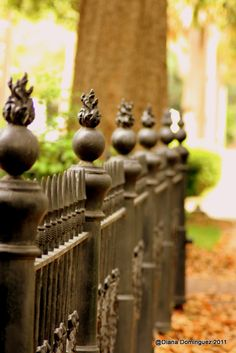 Love this old wrought iron fence in Savannah.