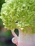 green hydrangeas - Google Search