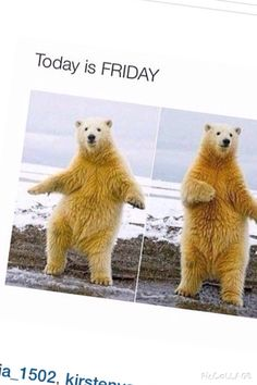 Friday Fanny Pics, Polar Bear, Friday, Lol, Animals, Funny Photos, Animaux, Animales, Funny Pictures