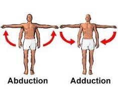 Abduction & Adduction: abduction (movement of a bone away from the midline) & adduction ( movement of a bone toward the midline) are angular movement. Moving humerus laterally at the shoulder joint is a sample of abduction Human Skeleton Anatomy, Human Anatomy, Shoulder Range Of Motion, Sports Therapy, Fundamentals Of Nursing, Visual Learning, Physical Therapy, Occupational Therapy, Nclex