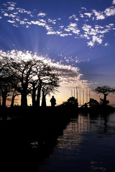 Sunset Baobab trees, James Island, River Gambia, West Africa