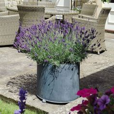 Garden Planters in zinc galvanized steel. High quality bespoke steel planters in square and trough designs. Large, heavy duty planters for exterior use. Large Garden Planters, Container Herb Garden, Stone Planters, Container Gardening Vegetables, Side Garden, Easy Garden, Garden Ideas, Garden Art, Small Space Gardening
