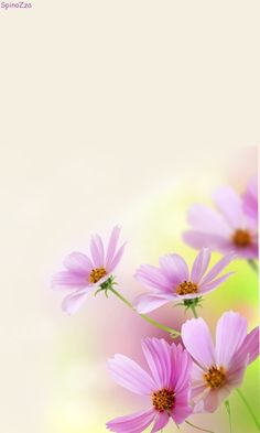 Download 480x800 «Нежно 11» Cell Phone Wallpaper. Category: Flowers