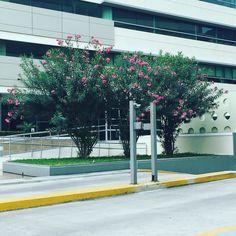#floresyjardines #landscaping #landscapingdesign #landscapingarchitecture #greenery #trees #jardineria #ecuador by floresyjardines_ec