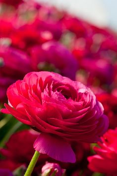 It just makes me happy to look at these great and bright flowers <3 RH