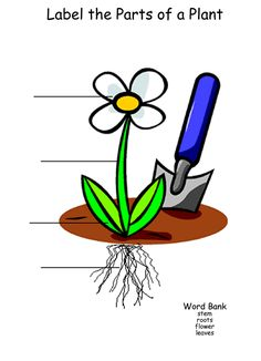 This worksheet allows the student to label the different parts of a plant. It includes a word bank. Printable Math Worksheets, Science Worksheets, Printables, 1st Grade Science, Teaching Science, Lap Book Templates, San Fernando Cadiz, Parts Of A Plant, Graphic Organizers