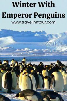 Winter With Emperor Penguins In Antarctica Photo Essay, Antarctica, Travel Aesthetic, Travel Destinations, Travel Tips, Travel Guides, Travel Photos, Dream Vacations, Emperor Penguins