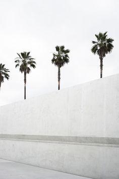 Napis mur palmy