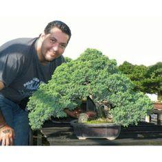 Roberto Serbanescu, bonsaista de Venezuela