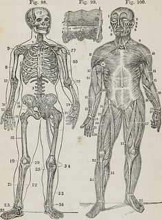 """Image from page 131 of """"Human and comparative anatomy, physiology, and hygiene"""" (1855) 