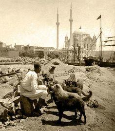 Говорещият с кучета - истанбулска версия. Tarih, siyaset ve hukuk konularında geniş bilgisi vardı Pictures Of Turkeys, Old Pictures, Old Photos, Blue Mosque, Second Empire, History Photos, Ottoman Empire, Historical Pictures, Antique Photos