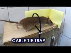 How to make ● a simple COAT HANGER HUMANE MOUSETRAP (that works!) - YouTube