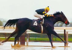 Today in Horse Racing History – July 03, 1977: Seattle Slew's nine-race winning streak came to an end in the Swaps Stakes at Hollywood Park, when he finished fourth, beaten 16 lengths by J.O. Tobin.  U.S. Champion 2-Year-Old Colt in 1976 U.S. Champion 3-Year-Old Colt in 1977 10th U.S. Triple Crown Champion in 1977 American Horse of the Year in 1977 U.S. Champion Older Male Horse in 1978 Hall of Fame in 1981 Leading sire in North America in 1984