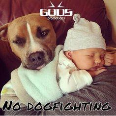 Nosotros si luchamos, ellos no.  No A las peleas de perros.  #Nodogfighting @GODSPROMOTIONS @ROMANTHAI
