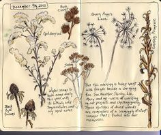 Sketching in Nature: Sandy Williams #art #journal #sketchbook