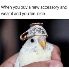 When you buy a new accessory and you wear it and you feel nice...