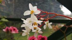 Ooty flower garden