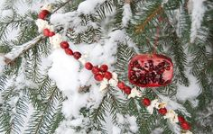 Christmas for the birds | for the birds | Christmas