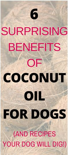 Is coconut oil good for dogs? Yes! You can use coconut oil for dogs to alleviate or heal many common health issues. Read this guide on the Benefits of Coconut Oil For Dogs and how to use it. #coconutoilfordogs