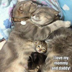 Kitty family family of kitties cats meow purr cat baby cat mommy cat daddy cat cat love Baby Animals, Funny Animals, Cute Animals, Wild Animals, Funniest Animals, Animal Babies, Cute Kittens, Cats And Kittens, Kitty Cats
